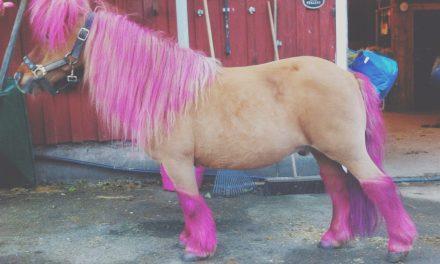 Rosa ponny