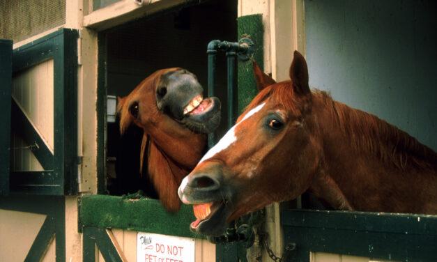 Förstår du hästens språk?