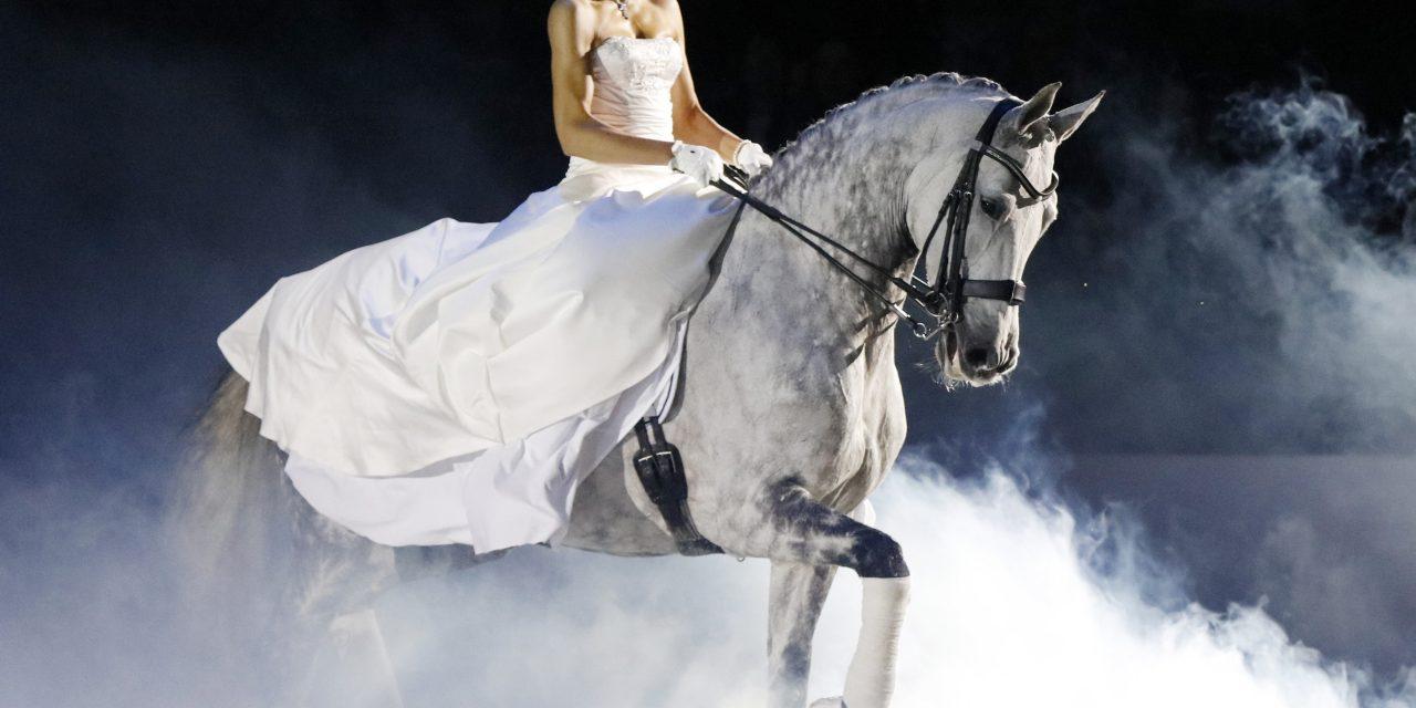 Eld, rök och stök – inga problem för tuffa hästar