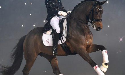 Danskt Varmblod – En sporthäst i världsklass