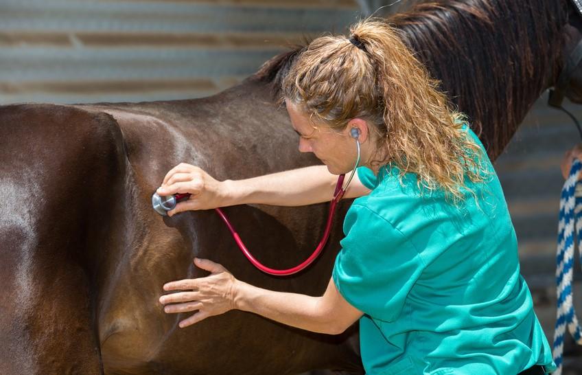 Hur går en veterinärbesiktning till?