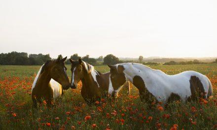 Vilken sommarhäst är du?