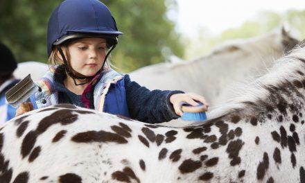 Få hästen skinande ren!