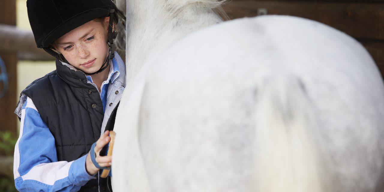 Förstår du hästen? – TEST