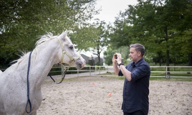 Om hästar hade instagram…