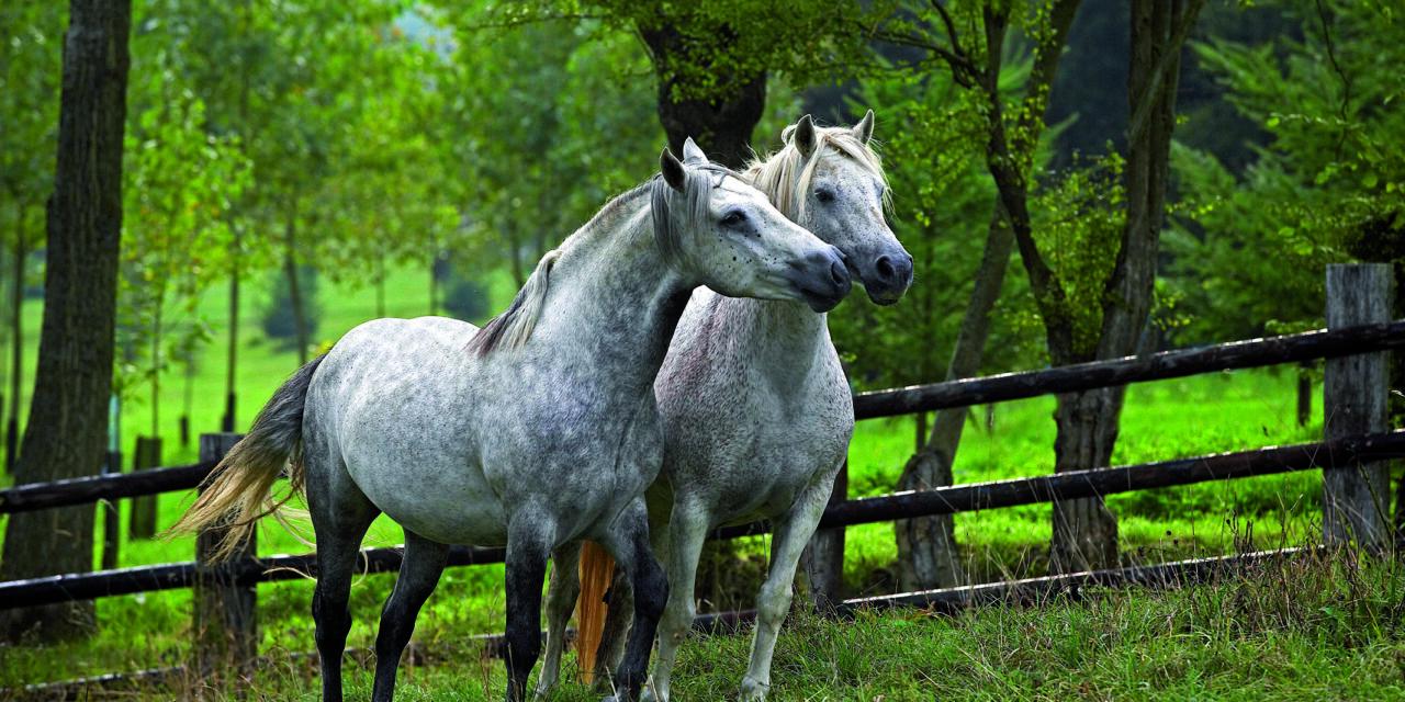 Connemara – Ponnyn med det stora hjärtat