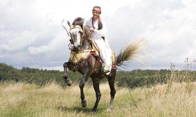 Berberhästen – tålig och inflytelserik