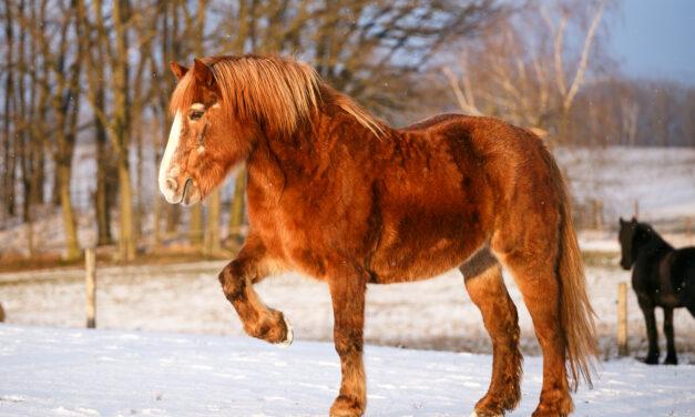 Hästens utveckling och åldrande
