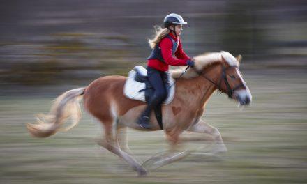 Frågeronden – Vad ska man göra när hästen skenar?