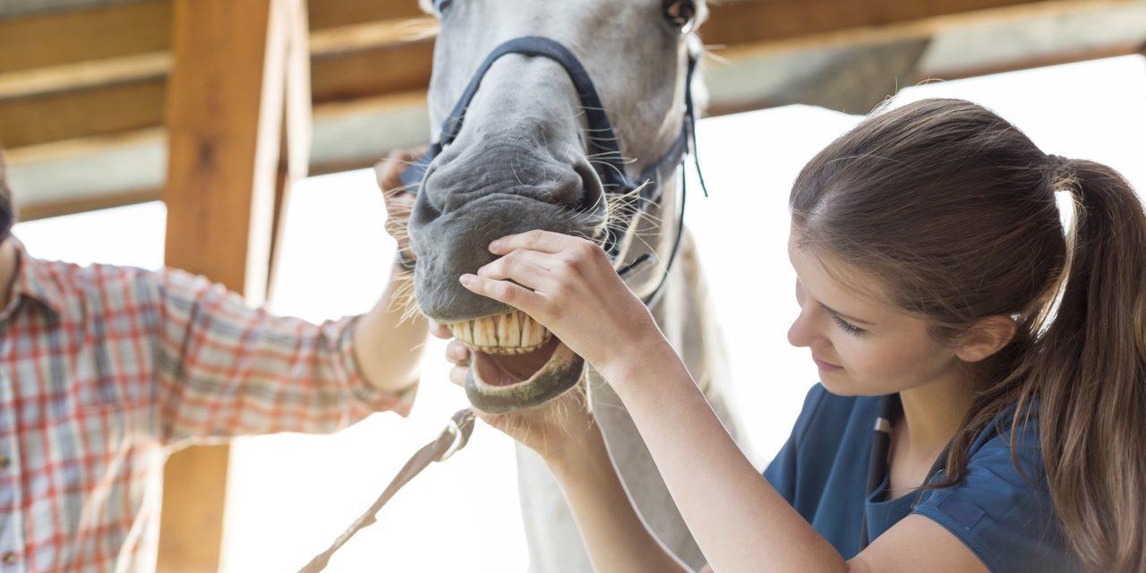 Passar du som veterinär?