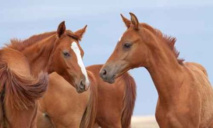 Kan du gissa hästraserna?