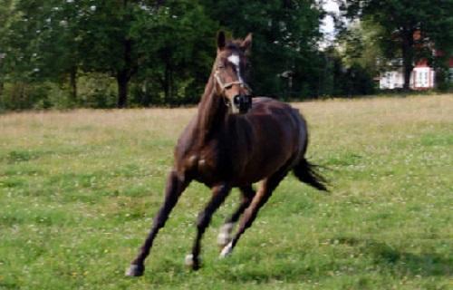 Hästens 4 F – del 2