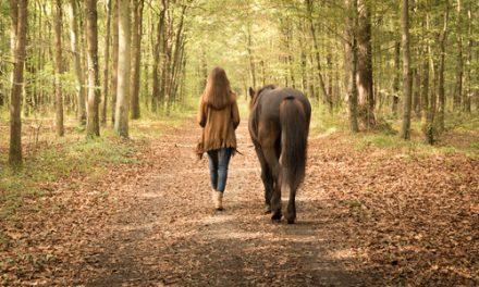Saker att göra med din häst – från marken