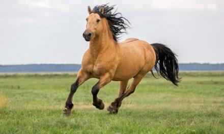 Kom närmare din häst med frihetsdressyr DEL 1