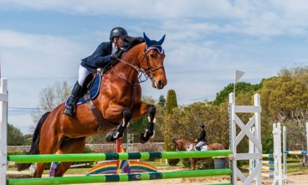 Fråga Anna – Ska hästar verkligen hoppa?