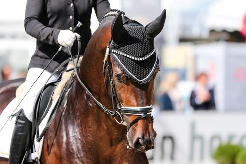 Hjälper – osynliga tecken mellan ryttare och häst