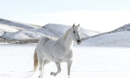 Övertala dina föräldrar till en egen häst, en guide i sex steg – DEL 2