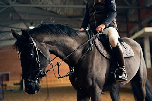 Köpa egen häst