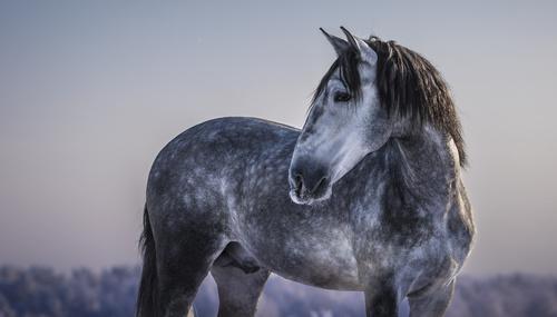 Kom närmare din häst med frihetsdressyr… DEL 2