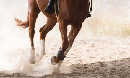 Rädd i sadeln? Bli en smartare ryttare! Del 1