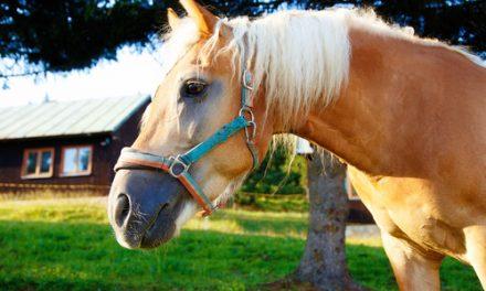 HOROSKOP – Så blir din hästsommar!