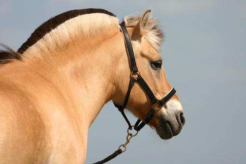 Hur är det att vara hästskötare? – Lukas och Prisse