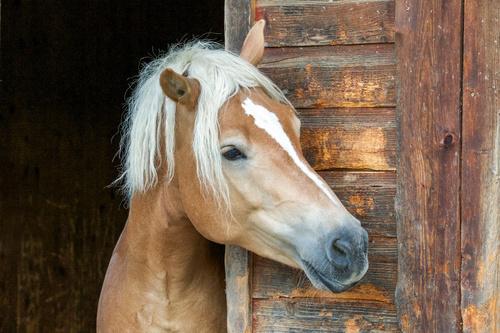 En ny häst åt Malva