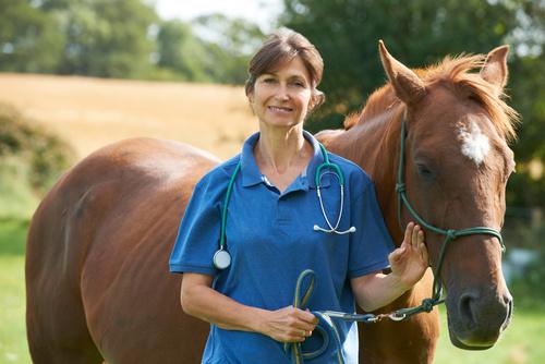 Fråga veterinären