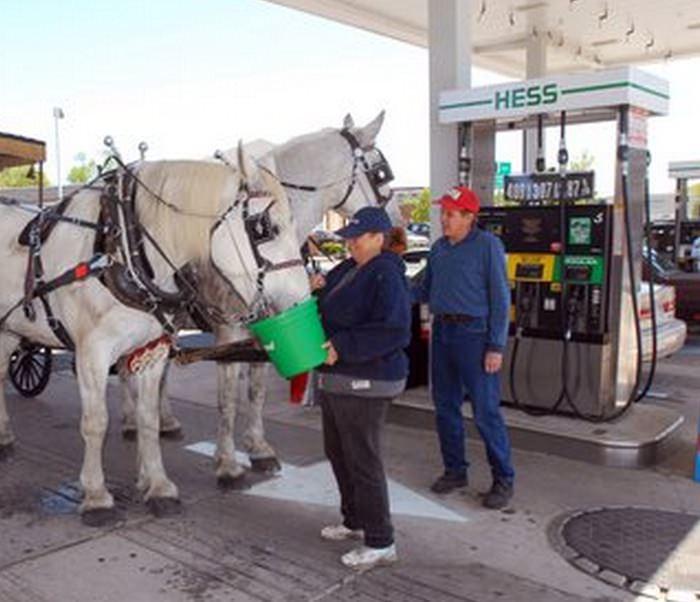 hastar-bensinsnala