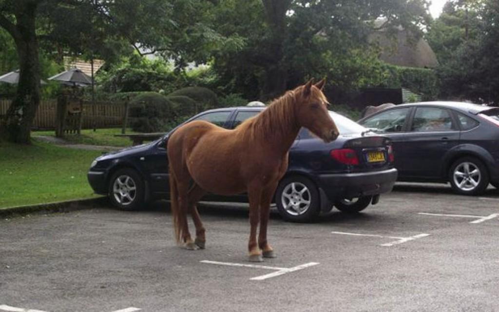 horse parking