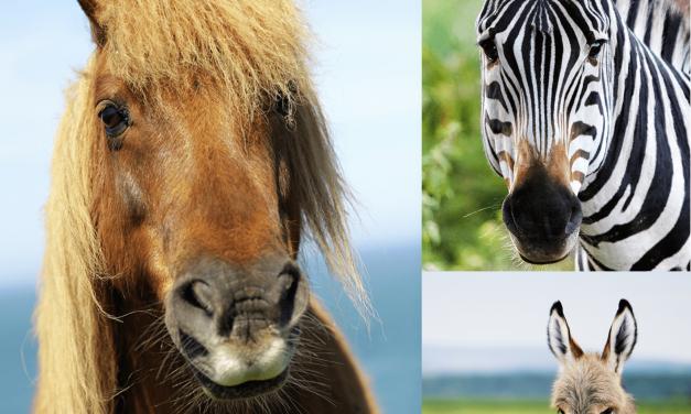 Vilket hästdjur är ditt spirit animal?