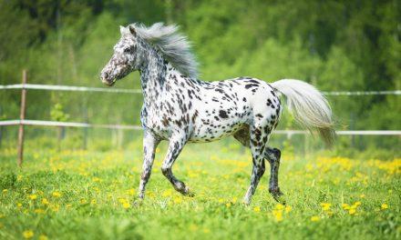 Prickiga Hästar