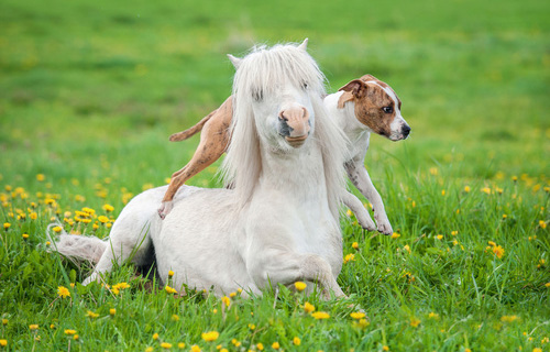 Roliga ponnylekar!