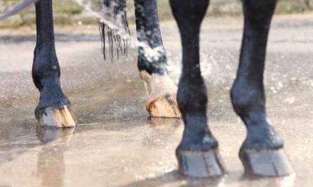 Spadags för din häst?