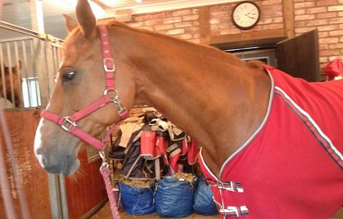 Det omdiskuterade hästtäcket